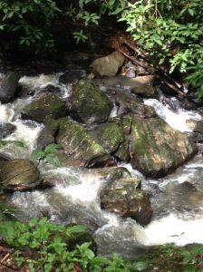 Creek at El Yunque rain forest